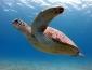 Всемирный день морских черепах