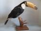 В 2001 году в Калужском краеведческом музее была открыта экспозиция «Экзотические животные»