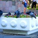 Голуби в сквере Воронина в калуге