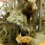 В отделе природы Калужского краеведческого музея