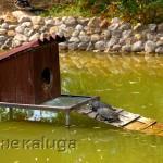 "В парке птиц ""Воробьи"" калуга"