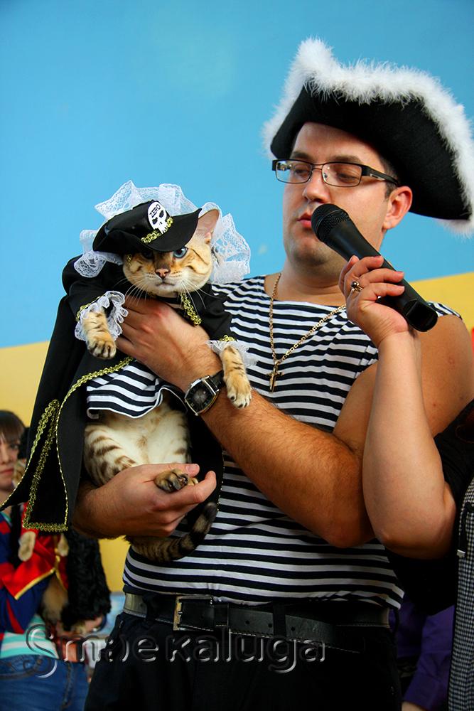 Джек-воробей, кот-казак, кошка-невеста — в Калуге проходит выставка кошек