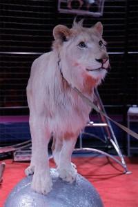цирк возле линии калуга