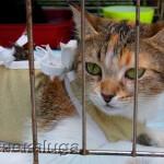 Выставка-раздача бездомных кошек в городе калуге