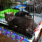 Выставка-раздача бездомных кошек