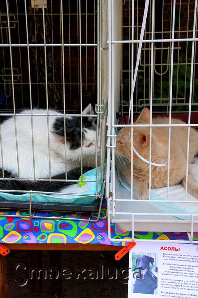 В Калуге прошла первая выставка-раздача бездомных кошек
