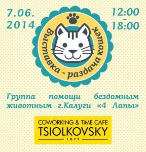 Первая выставка бездомных кошек калуга