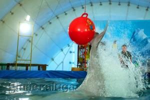 Дельфин с мячом калуга