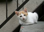 4 июня в Городском досуговом центре пройдёт благотворительная акция по сбору помощи для животных из приютов