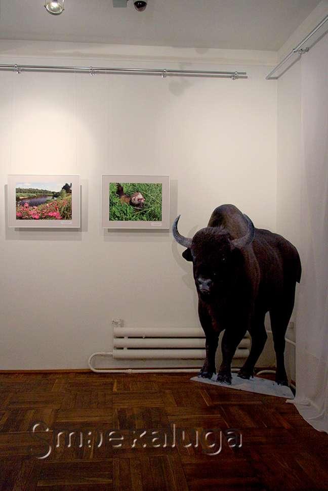 Во флигеле Калужского краеведческого музея открыта новая фотовыставка