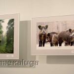 На выставке национального парка Угра в калуге