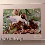 На выставке национального парка Угра в музее