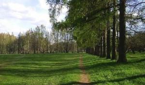 Парк бывшей усадьбы Яновских калуга