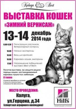 Выставка кошек «Зимний вернисаж»