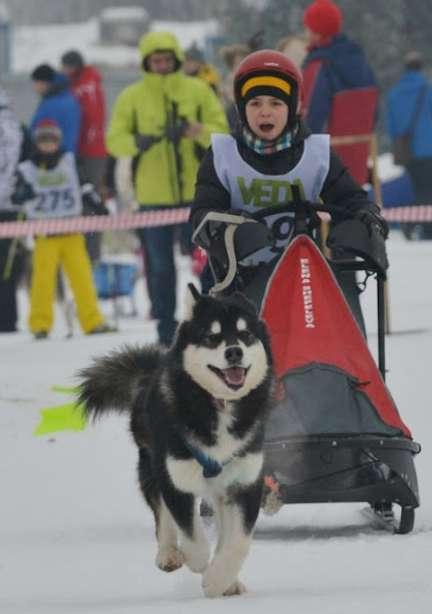 Под Боровском вновь пройдут Всероссийские соревнования по ездовому спорту «Снежная межура»
