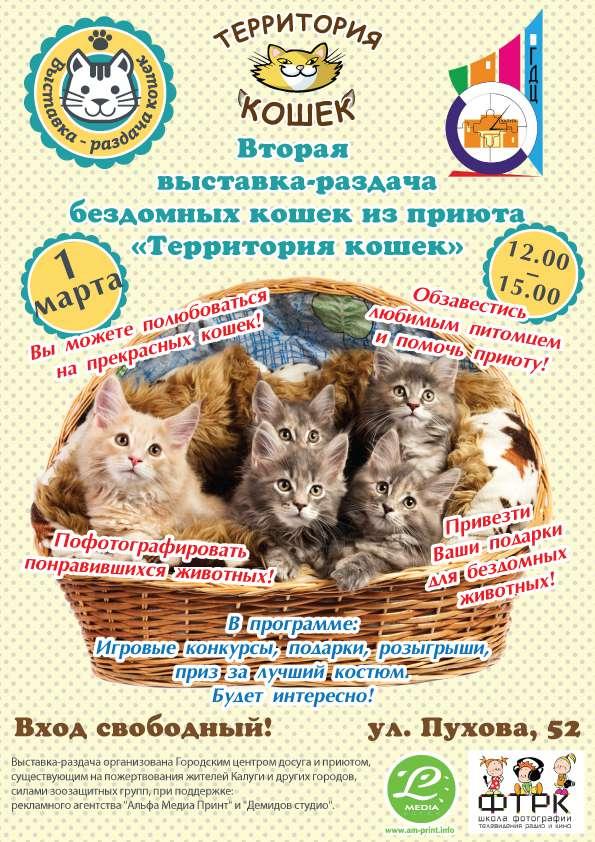 В выходные в Калуге пройдёт Вторая выставка-раздача кошек