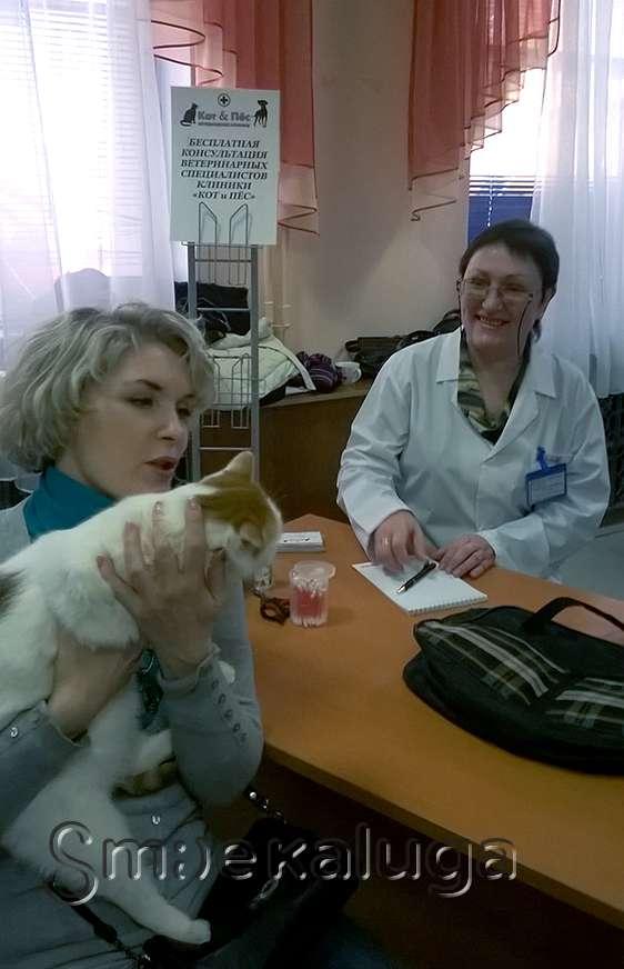 В Калуге вновь пройдёт выставка бездомных кошек и собак