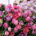 Выставка цветов калуга