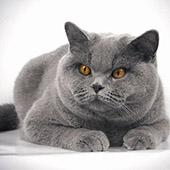 Международная выставка кошек в ТЦ «Московский»