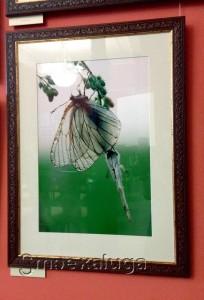 На фотовыставке калуга