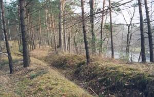 Окопы времен Великой отечественной войны (Жиздра, Березичское лесничество) калуга