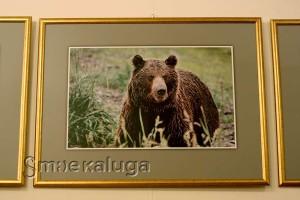Из серии фотографий с бурыми медведями калуга
