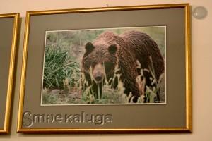 Из серии фотографий с бурыми медведями в калуге