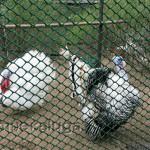 Птичий двор в Графских прудах калуга