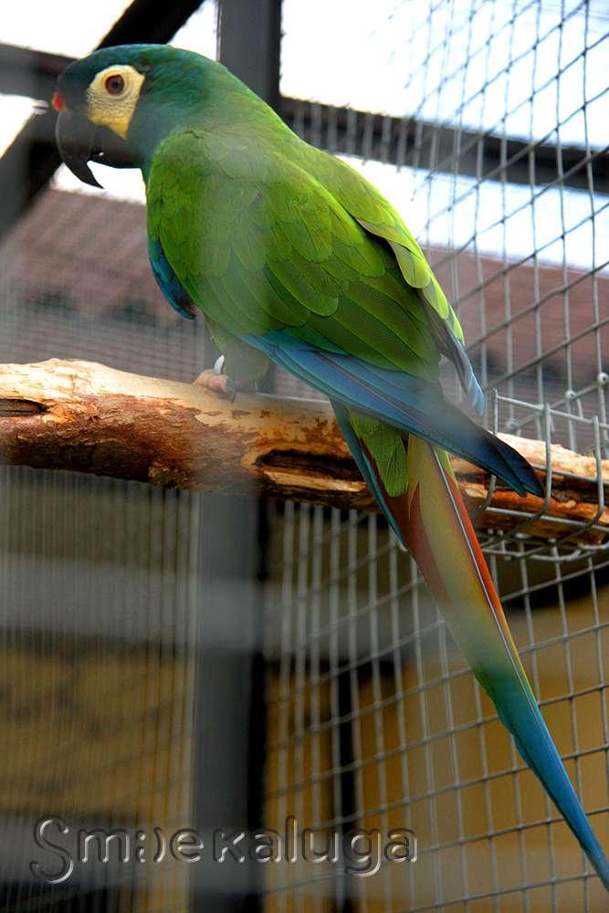 Парк птиц «Воробьи» получил премию Правительства РФ