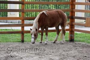 Вольер с лошадью калуга
