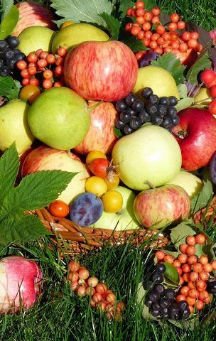 В выходные вегетарианцы и сыроеды соберутся на традиционный «Вегфест» в Этномире