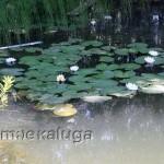 пруд в боровске