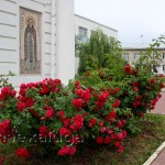 Розы у собора Петра и Павла
