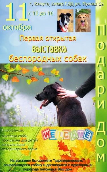 Первая открытая выставка беспородных собак «Подари дом» в Городском досуговом центре