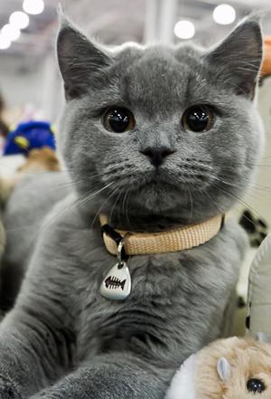 Международная выставка кошек в Калужском аграрном колледже