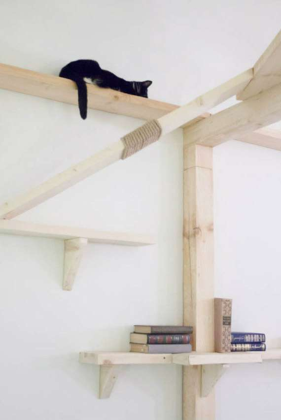 В Калуге открылось кото-кафе