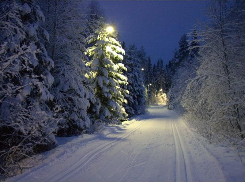 В Губернском парке открыта освещённая лыжная трасса