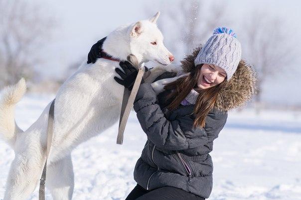 6 февраля в Центральном парке пройдёт благотворительная фотосессия с собаками хаски