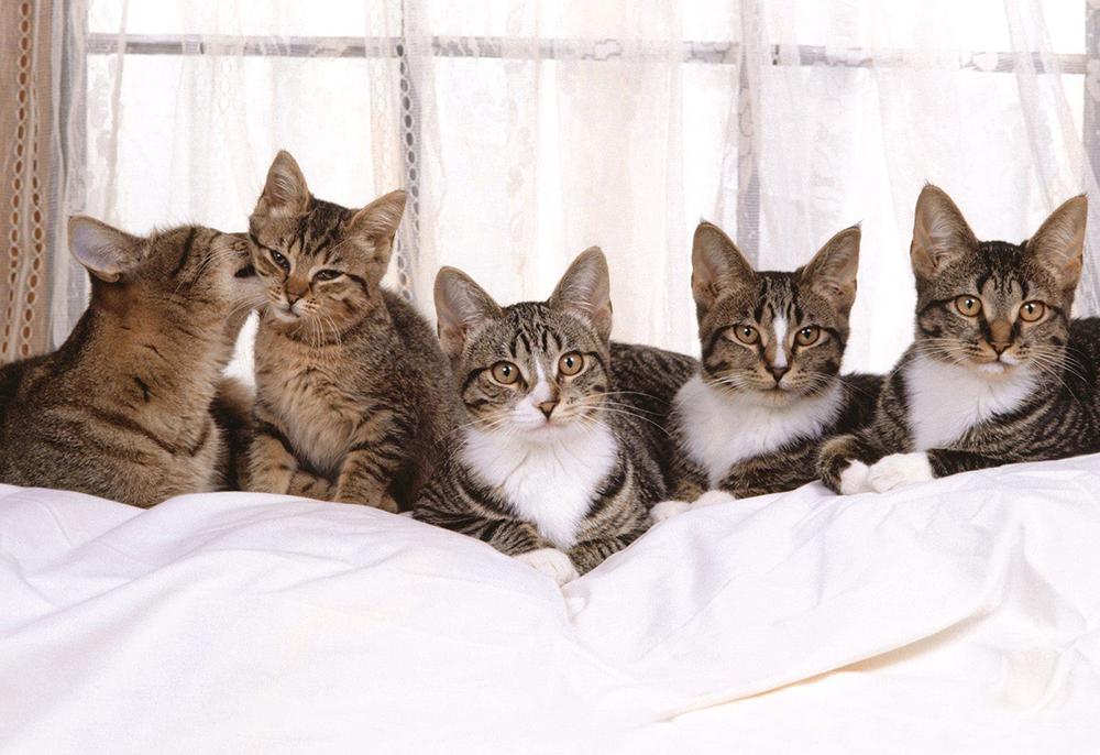 28 февраля в Городском досуговом центре пройдёт выставка-раздача кошек