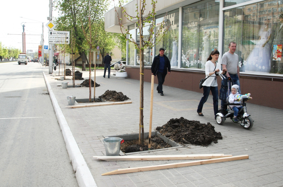 На улице Кирова высадили зелёную «Аллею горожан»