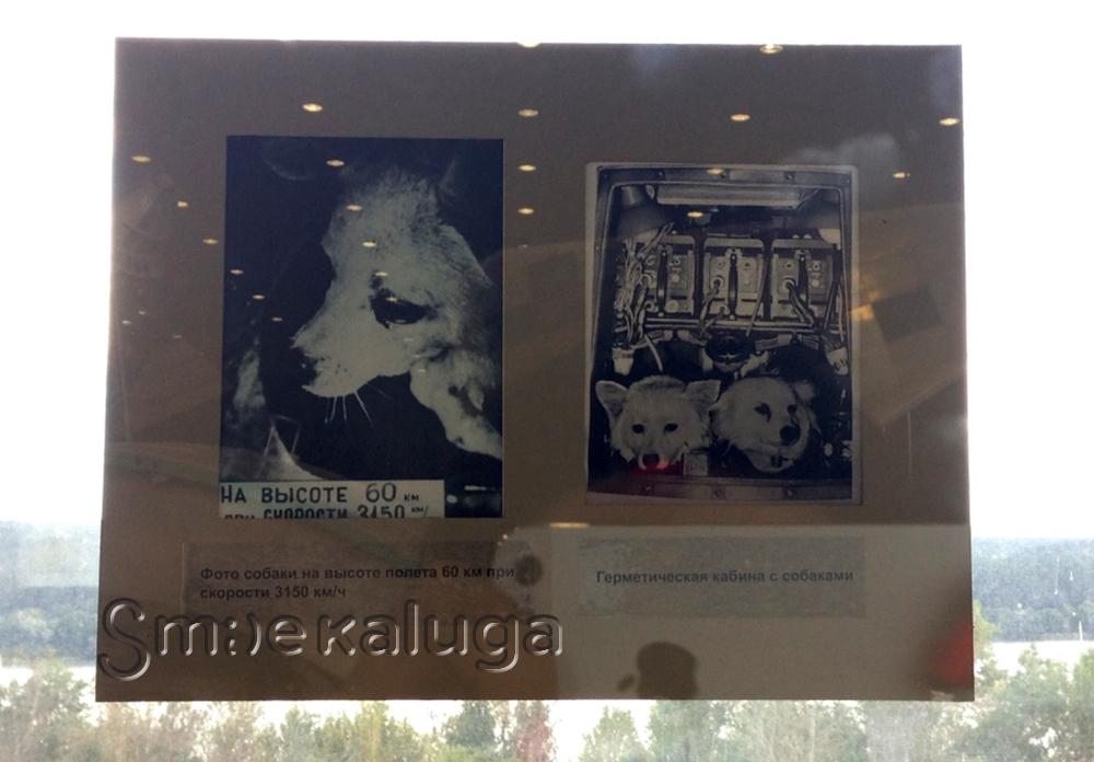 Музей онлайн: Истории собак-«космонавтов» в экспозиции ГМИК им. К. Э. Циолковского