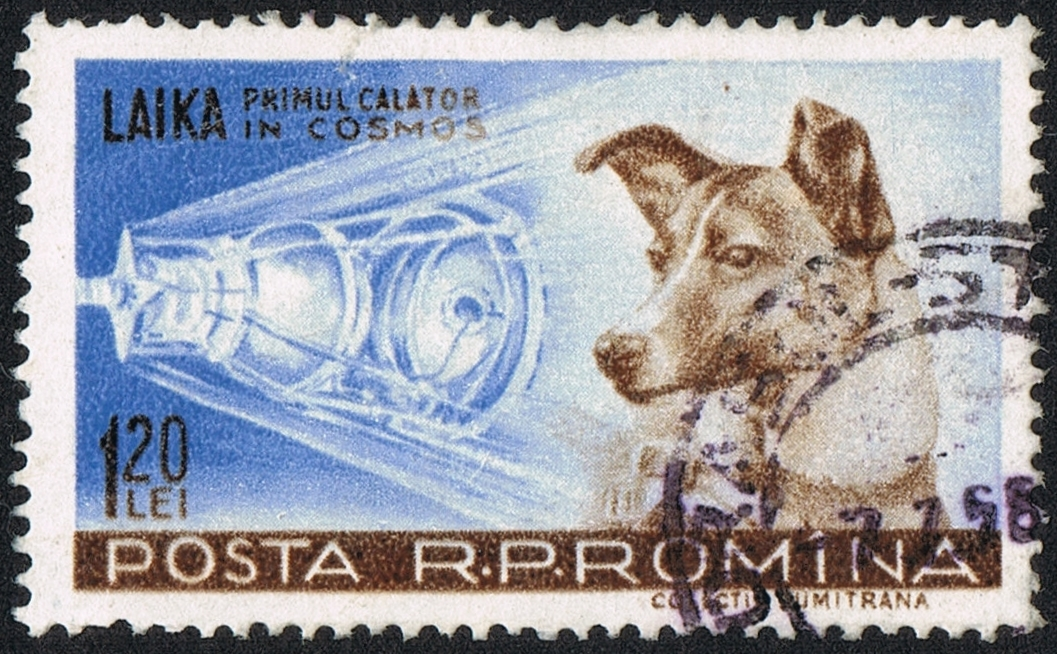 История собаки Лайки, совершившей первый полёт на искусственном спутнике Земли