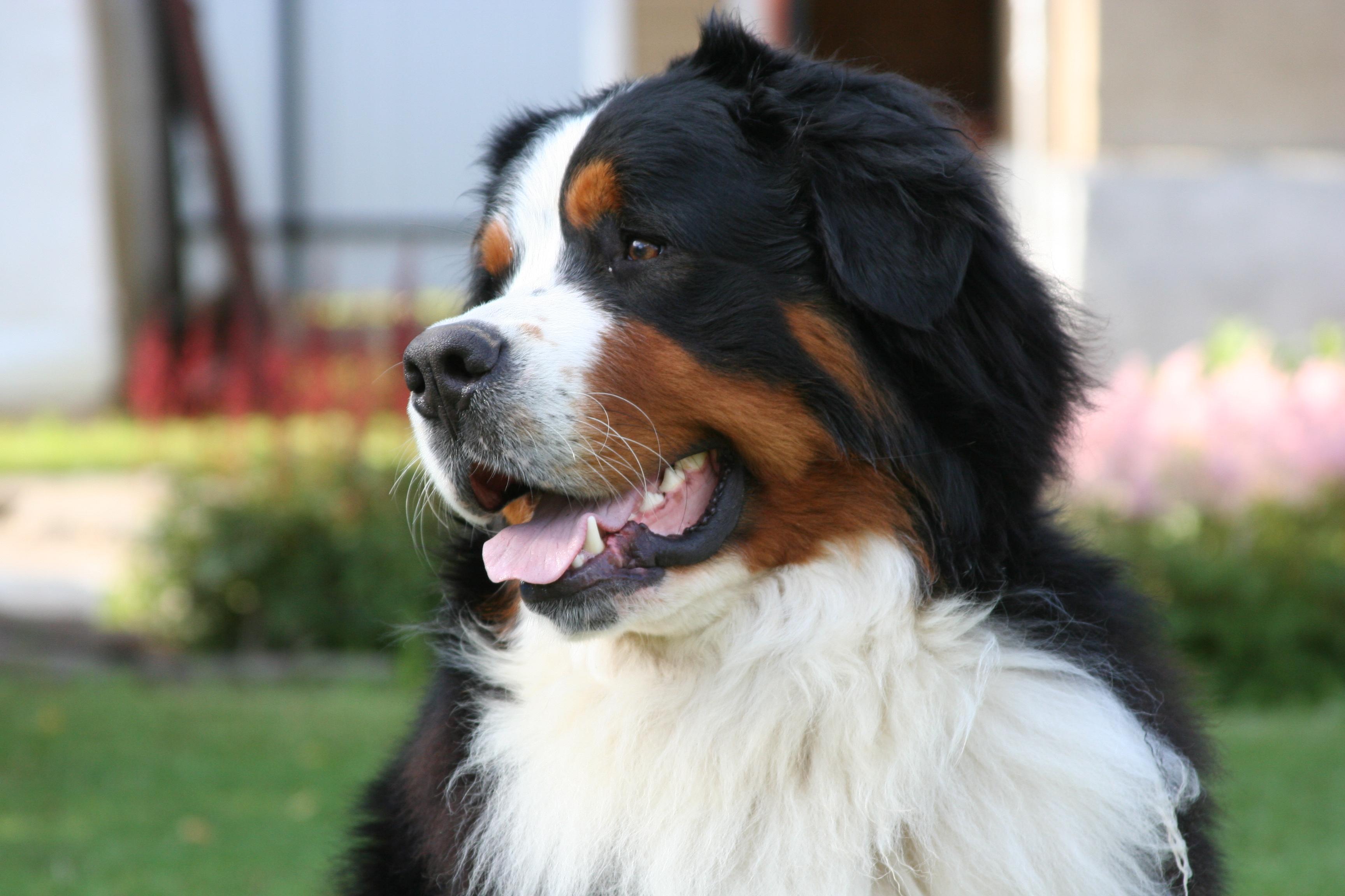 Бесплатные тренировки с собаками в Городском бору