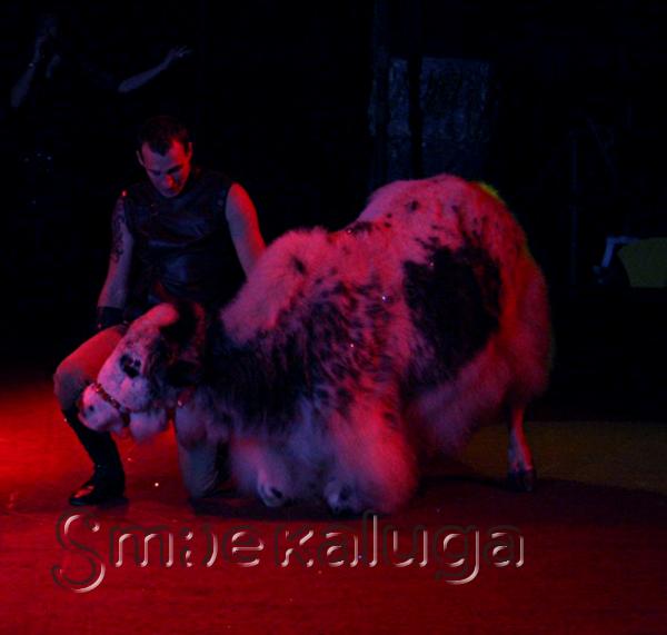 В Калуге открылись гастроли цирка-шапито «Алле»