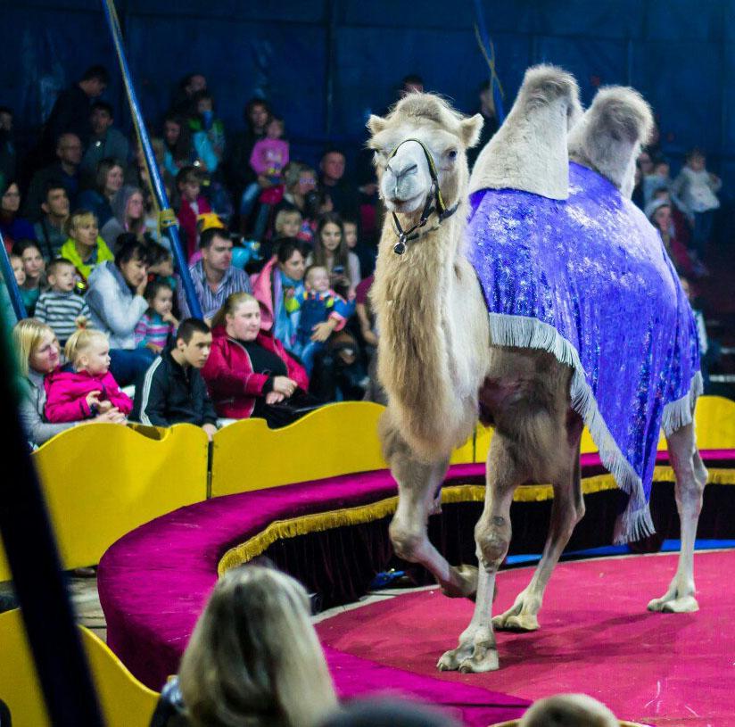 20 октября в Калуге возле гипермаркета «Линия» начинает гастроли цирк «Алле»