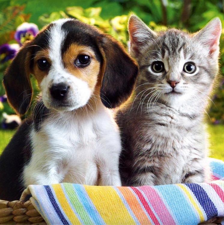 Приют домашних животных «Верные друзья» приглашает на выставку-пристройство кошек и собак