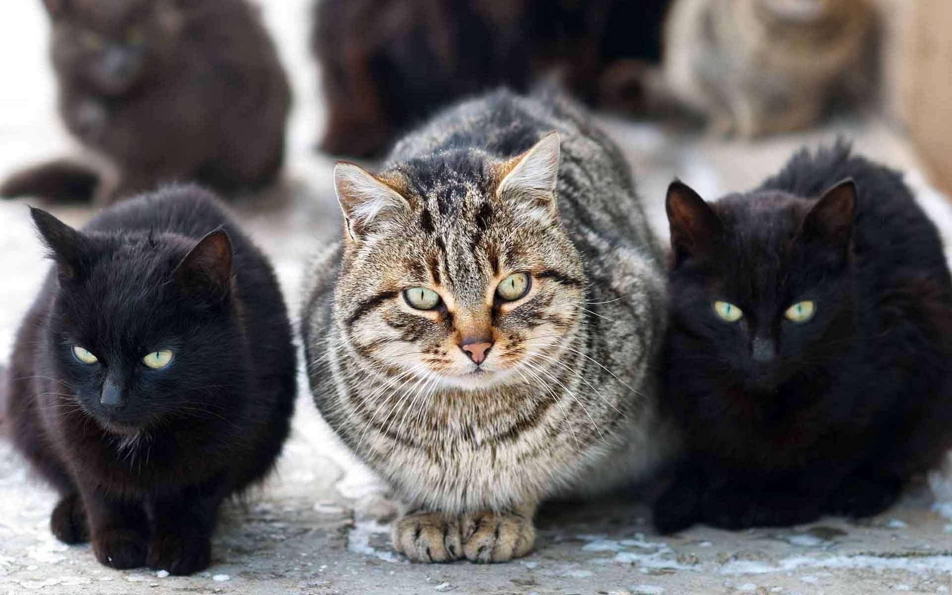 5 благотворительная выставка-раздача кошек в Областном молодёжном центре