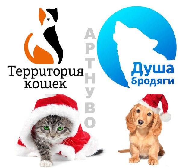 Акция помощи бездомным животным «Твори добро» на Кирова, 54а (художественная студия АртНуво)