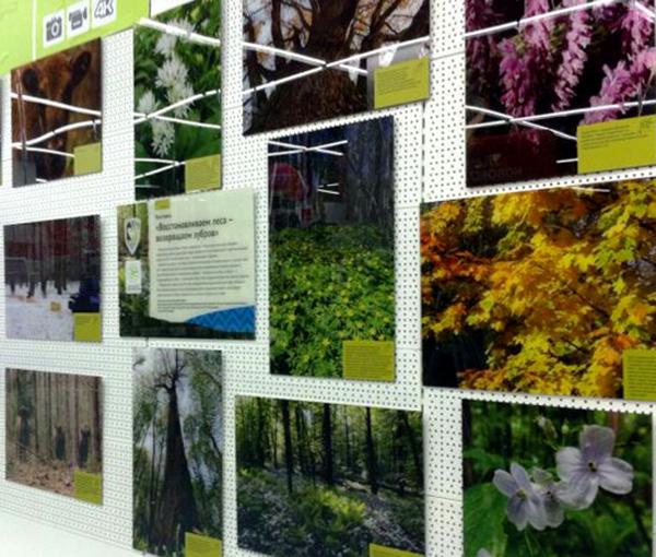 В одном из магазинов бытовой техники в Калуге открылась выставка НП «Угра» «Восстанавливаем леса – возвращаем зубров»