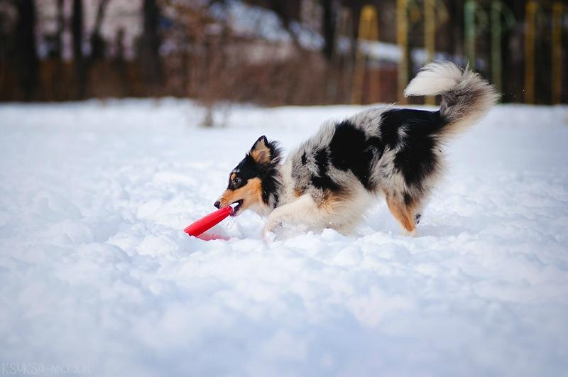 Бесплатные тренировки с собаками